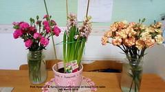 Pink Hyacinth & Spray Chrysanthemums on living room table  4th March 2019 (D@viD_2.011) Tags: pink hyacinth spray chrysanthemums living room table 4th march 2019