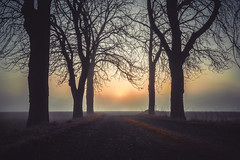 Morning sun. (A.Dissing) Tags: white black art light dark contrast a7 a7ii a7m2 sony anders dissing masterpiece super detail fantastic good positive photo pixel mm creative beautiful color composition moment europe artistic other danish denmark danmark different exposure enjoy young unique weather scene awesome dope angle perfect perspective interesting flickr explore unusual adventure happiness morning sun sunrise fog foggy mist misty work late