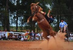 Pelanca e Troncho da Sem Querência (Eduardo Amorim) Tags: gaúcho gaúchos gaucho gauchos cavalos caballos horses chevaux cavalli pferde caballo horse cheval cavallo pferd pampa campanha fronteira quaraí riograndedosul brésil brasil sudamérica südamerika suramérica américadosul southamerica amériquedusud americameridionale américadelsur americadelsud cavalo 馬 حصان 马 лошадь ঘোড়া 말 סוס ม้า häst hest hevonen άλογο brazil eduardoamorim gineteada jineteada