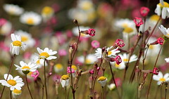 Wildflowers (ᗰᗩᖇᓰᗩ ☼ Xᕮ∩〇Ụ) Tags: αγριολουλουδα ελλαδα στιγμεσ χρωματα ανοιξη greece wildflowers spring moments colors farben momente frühling griechenland wildeblumen morning morgens canoneos1100d