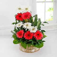 The Miracle Of Send Birthday Flowers Online India | send birthday flowers online india (franklin_randy) Tags: birthday flowers send cake online india