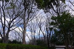 19o2797 (kimagurenote) Tags: tree 東高根森林公園 higashitakane forest park 川崎市宮前区 miyamaekawasaki