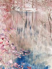 Bushy park pond ~HSS (Wendy:) Tags: hss reflections ir digital infrared bushypark photoshop nik