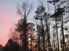 Trees With Pink And Blue Sky. (dccradio) Tags: lumberton nc northcarolina robesoncounty outdoor outdoors outside nature natural march spring springtime tuesday tuesdayevening evening goodevening tree trees treebranch treebranches branch branches pinksky sky bluesky treelimb treelimbs scenic beauty pretty beautiful canon powershot elph 520hs