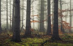In the Woods (Netsrak) Tags: baum bäume eu eifel europa europe forst landschaft natur nebel rheinland rhineland wald fog forest landscape mist nature outdoor trees winter woods
