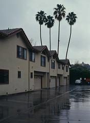 Sunnyvale, California (bior) Tags: pentax645nii pentax645 6x45cm slidefilm mediumformat 120 sunnyvale california suburbs residential ektachrome kodakektachrome e100vs ektachrome100vs expiredfilm house garage driveway palmtree apartment rain