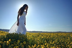 Walking in the flower fields (PeterThoeny) Tags: carrizoplain carrizoplainnationalmonument california usa park field pasture flowers bloom superbloom californiasuperbloom woman dress white whitedress fabric lining landscape sky outdoor clear day sun backlight sony a7 a7ii a7mii alpha7mii ilce7m2 fullframe fe2870mmf3556oss 1xp raw photomatix hdr qualityhdr qualityhdrphotography yellow nationalpark fav200