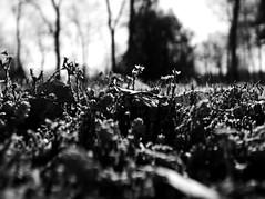 forest (tomoya_murakami) Tags: finnland helsinki monochrome