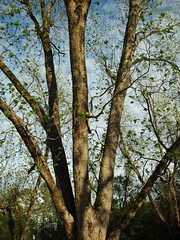 Sky And Tree. (dccradio) Tags: lumberton nc northcarolina robesoncounty outdoor outdoors outside nature natural park citypark raymondbpenningtonathleticcomplex penningtonathleticcomplex northeastpark april weekend saturday saturdaynight saturdayevening evening goodevening spring springtime hp hewlettpackard hpdsccb350 tree trees treebranch branch branches treebranches treelimb treelimbs sky eveningsky