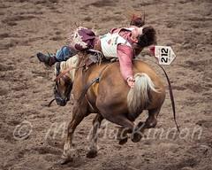Calgary Stampede 2016 (tallhuskymike) Tags: calgarystampede event calgary rodeo stampede cowboy horse alberta action 2016 outdoors prorodeo