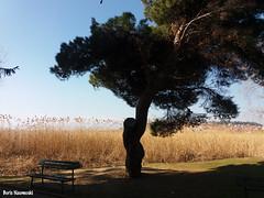 A park in February (borisnaumoski) Tags: tree bench shore lake ohrid macedonia winter february nature park