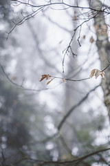 die hard (Marco - MB Photography) Tags: diehard dryleaves winterleaves bokeh forest woods leaf feuillesmortes bois foret foresta fujifilmxe2 fujinonxf35mmf14r fujixseries mamuangsuk