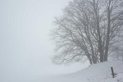 Misty conditions in Bavaria, Germany (Yvo Kaptein) Tags: fog tree misty bayern germany bavaria winter snow