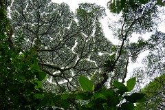 Tree Canopy #costarica #tree #canopy #nature #flower #landscape (ryan.a.brown1) Tags: costarica tree canopy nature flower landscape
