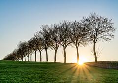 There`s a light (MSR-Photoarts) Tags: frönendberg sonnenuntergang sunset sunrise baum bäume tree trees allee winter sonnenaufgang unna kreis deutschland nrw germany sony a7iii a7 mark iii magie licht