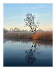 Ethereal Landscape (Steven Docwra) Tags: norfolkbroads frozen mist eastanglia norfolk reflection tree sunlight nationalpark thebroads sunrise dawn blue orange winter