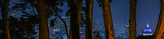 through the cypress trees (pbo31) Tags: bayarea california nikon d810 night dark black color january 2019 boury pbo31 sanfrancisco city urban alamosquare park skyline over trees cityhall dome panorama large stitched panoramic depthoffield blue
