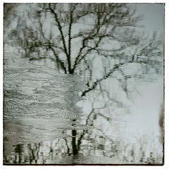 Frozen pond. (jeanne.marie.) Tags: teal frozen pond reflection water ice winter mydailywalk tree cold