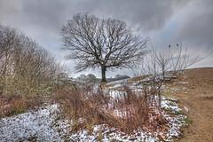 Standing  Strong (ArtGordon1) Tags: hollowpond hollowponds london england uk winter january 2019 davegordon davidgordon daveartgordon davidagordon daveagordon artgordon1 trees