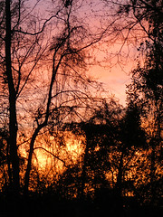Saturday Sunset. (dccradio) Tags: lumberton nc northcarolina robesoncounty outdoor outdoors outside nature natural sunset evening eveningsky february winter goodevening saturday saturdaynight saturdayevening canon powershot elph 520hs tree trees treebranch treebranches branch branches treelimb treelimbs beauty scenic woods forest wooded settingsun eveningcolors daylightends eveningbegins silhouette