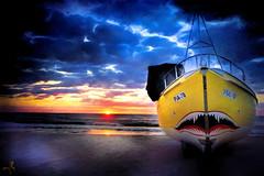 ~~~   the shark of the baltic sea  ~~~ (jmb_germany) Tags: