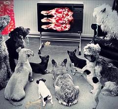 'TV Dinner pals Club' (tishabiba) Tags: montage tvdinner dogs dogsdinner artphoto artwork conceptional perception illusion surreale surreal surrealism digitalart tish digitalmania