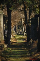 IMG_8330 (Pfluegl) Tags: wien vienna zentralfriedhof graveyard europe eu europa österreich austria chpfluegl chpflügl christian pflügl pfluegl spring frühling simmering