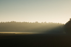 20180505-Canon EOS 750D-8930 (Bartek Rozanski) Tags: mozet namur belgium ardennes belgie belgique ardennen spring sunrise field agriculture contrast morning mist forest