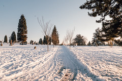 Vancouver-Winter-Walks-30 (_futurelandscapes_) Tags: vancouver winter snow cold february mountainview cemetery trees arboretum sunset evening graves sunny blue white vintage