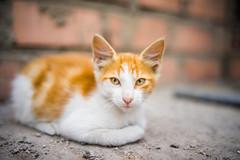 SLR Magic 35mm F1.2 (W WWWWWWWWWWWWWWWWWWWWWW) Tags: gatito kitten slr magic 12 bokeh