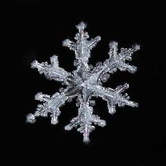 Shine (Margo Dolan) Tags: ringflash canon snow snowflake crystal symmetry monocolor cold winter frozen ice macro extrememacro