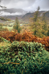 A Patch on the Landscape (Benjamin Driver) Tags: landscape shallowdepthoffield depth field depthoffield moss peat peatmoss trees tree lakedistrict macro macrolandscape macroscape wide
