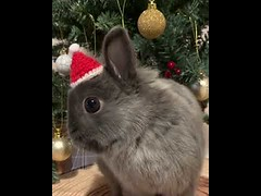 Cute Bunny Merry Xmas (tipiboogor1984) Tags: awwstations aww cute cats dogs funny