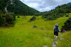 20181229 036 Greenstone Track d1 (scottdm) Tags: 2018 day1 december greenstonetrack guidedhike newzealand southisland summer thegrandtraverse travel ultimatehikes