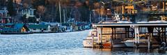 Portage Bay (amarilloladi) Tags: seattle portagebay washington pacificnorthwest marina boats boathouses ships water bay seattleyachtclub