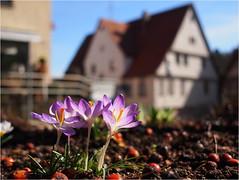 17.03.2018 - unterwegs in Haiterbach - (HOR-BS 696) Tags: berndsontheimer badenwürttemberg haiterbach