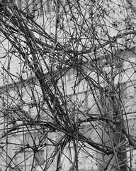 City Jungle 2 (JamieDieu) Tags: 35mmfilm blackandwhite ilford dslrscan om2