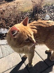 SIGHTING yellow and white cat #Shawnessy Pls RT and share to help get this kitty home YYC Pet Recovery shared a post. This very chatty & handsome guy has been visiting us daily down in Shawnessy for about the past month. Between us and our neighbours, we' (yycpetrecovery) Tags: ifttt march 31 2019 0111am