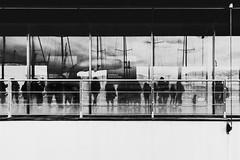 Visita all'Acquario di Genova (Tiziano Caviglia) Tags: genova liguria ligurie ligurien italia italy italie italien architettura architecture architektur arquitectura urbanphotography fujifilm fujifilmxt2 genoa genua gênes superbiigenovesielalorocittà portoantico porto port puerto hafen acquariodigenova samyang12mmf20ncscs acquario acuariopúblico publicaquarium aquariumpublic öffentliche schauaquarium