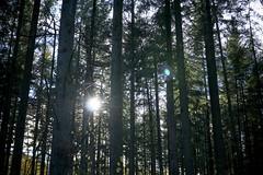 the power of nature (Jos Mecklenfeld) Tags: autumn herbst herfst nature natur natuur forest wald bos westerwolde niederlande nederland jipsingboertange groningen netherlands nl pagan paganism sun zon sonne sonya6000 sonyilce6000