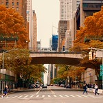 City colors in Autumn  - New York City thumbnail
