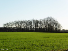 Stand (mark.griffin52) Tags: england buckinghamshire cheddington countryside trees landscape