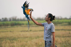 landing 6 (Aung@) Tags: macaw parrot flying landing hand continuos sony alpha a9 fe 70200 f4 lens thailand aungkw