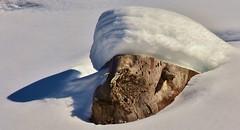'Sultan of Snow' (henkmulder887) Tags: oostenrijk boomstronk vilsalpsee tannheimertal winterwandeling sneeuw snow schnee