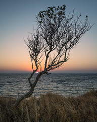 Framed Sunrise (Pascal Riemann) Tags: availablelight pflanze sonnenaufgang deutschland baum fehmarn natur ostsee balticsea dawn germany nature sunrise vogelfluglinie plant