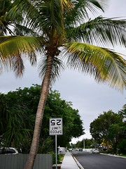 Upside Down (Toni Kaarttinen) Tags: usa unitedstates florida wpb america lakeworth lw palmbeachcounty palm palms palmtree upside down