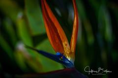 Garden Shots-4160 (Jeffrey Balfus (thx for 4 Million views)) Tags: sonya9mirrorless sonyalpha sonyilce9 fullframe 90mmf28macrogossprimelensmacro sel90m28g flowersplants