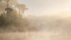 Early Mornings (Wim Boon Fotografie) Tags: wimboon canoneos5dmarkiii canonef70200mmf4lisusm leefilternd09softgrad earlymornings holland nederland netherlands natuur nature oisterwijksebossenenvennen fog mist
