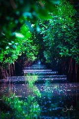 #nature #pichavaram #mangroves (Jansha Crazy) Tags: pichavaram nature mangroves water lake sea trees