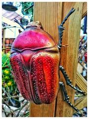 Bug A Boo 😉 #bug #beetle #beetles #insect #bigbug #redbug #kever #kevers #gardendecoration #tuindecoratie #decoration #deco #decoratie #lovephotography #photography #photographer #fotografie #fotograaf (Chantal vander Reijden) Tags: deco redbug bigbug beetles tuindecoratie gardendecoration decoratie lovephotography beetle fotografie fotograaf bug kevers insect kever photographer decoration photography